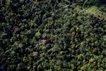Borneo rainforest -- sabah_0909