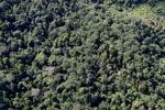 Borneo rainforest -- sabah_0910