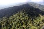 Logged Borneo forest -- sabah_0915