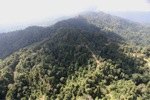Logged Borneo forest -- sabah_0916