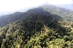 Logged Borneo forest -- sabah_0917