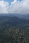 Oil palm plantation -- sabah_0919