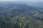 Oil palm plantation -- sabah_0921
