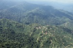 Oil palm plantation -- sabah_0922