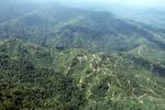 Oil palm plantation -- sabah_0923