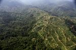 Oil palm plantation -- sabah_0926