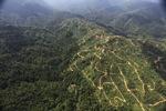 Oil palm plantation -- sabah_0927