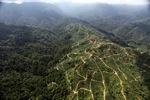 Oil palm plantation -- sabah_0928