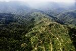 Oil palm plantation -- sabah_0930