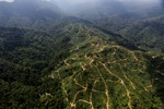 Oil palm plantation -- sabah_0931
