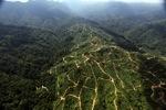 Oil palm plantation -- sabah_0932