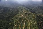 Oil palm plantation -- sabah_0933