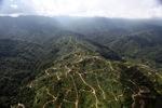 Oil palm plantation -- sabah_0935
