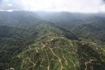 Oil palm plantation -- sabah_0936