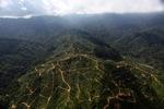 Oil palm plantation -- sabah_0937