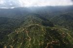 Oil palm plantation -- sabah_0938