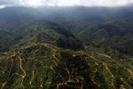 Oil palm plantation -- sabah_0940