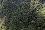 Borneo rainforest -- sabah_0944