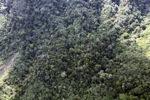 Borneo rainforest -- sabah_0945