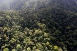 Borneo rainforest -- sabah_0949