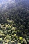 Borneo rainforest -- sabah_0950
