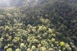 Borneo rainforest -- sabah_0951