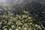 Borneo rainforest -- sabah_0952