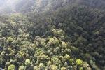 Borneo rainforest -- sabah_0953