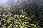 Borneo rainforest -- sabah_0954