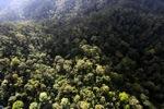 Borneo rainforest -- sabah_0955