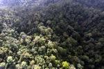 Borneo rainforest -- sabah_0956