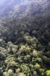 Borneo rainforest -- sabah_0957