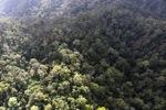 Borneo rainforest -- sabah_0958