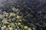 Borneo rainforest -- sabah_0959