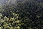 Borneo rainforest -- sabah_0960