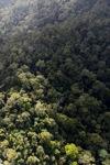 Borneo rainforest -- sabah_0961
