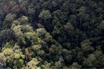 Borneo rainforest -- sabah_0965