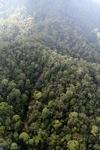 Borneo rainforest -- sabah_0966