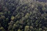 Borneo rainforest -- sabah_0967