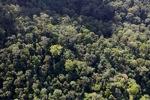 Borneo rainforest -- sabah_0973