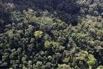 Borneo rainforest -- sabah_0974