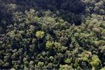 Borneo rainforest -- sabah_0975