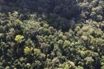 Borneo rainforest -- sabah_0977