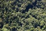 Borneo rainforest -- sabah_0978