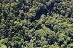 Borneo rainforest -- sabah_0979