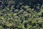 Borneo rainforest -- sabah_0980