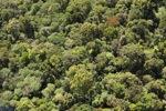 Borneo rainforest -- sabah_0981