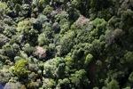 Borneo rainforest -- sabah_0982