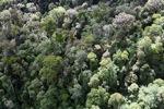Borneo rainforest -- sabah_0983
