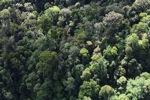 Borneo rainforest -- sabah_0984